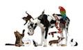 information des acquéreurs d'animaux domestiques- info auxivet- asv