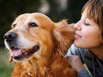 Accepter la fin de vie de son animal de compagnie