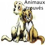 animaux trouvés aide à l'identification