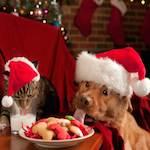 cadeau chien chat noel