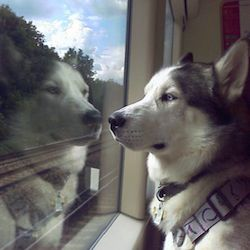 chiens autorisés dans le métro