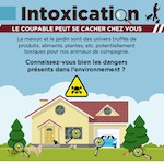 intoxication chien chat les dangers de la maison