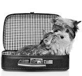 vacances chien chat avec petscool