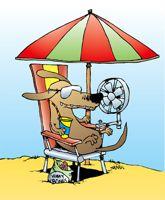 coup de chaleur du chien