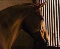 Enrichir le milieu de vie du cheval