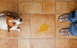 propreté du chiot conseils vétérinaire