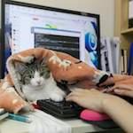 animaux au travail pour apaiser les salariés