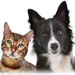 code juridique de l'animal