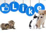 page facebook pour la clinique vétérinaire
