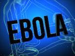 animaux et ébola