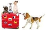 nouveau passeport Européen pour carnivores domestiques