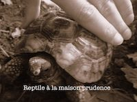 reptiles et salmonellose auxivet