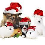 animaux cadeaux de noel